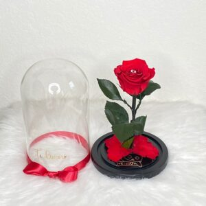 Preserved Rose / Beauty & the beast